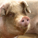 This PIG – Predictive Information Governance – Is Starting to Fly